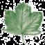 DENECKE - Gartengestaltung Baumpflege Forstarbeiten
