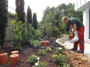 Beetbepflanzung mit Säulentaxus 4m, Kamelien und Peonien