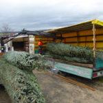 Weihnachtsbaum verladen