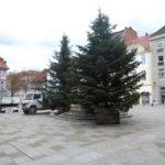 Weihnachtsbaum für Göttinger Weihnachtsmarkt